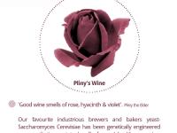 The Invisible Tour- Pliny's Wine