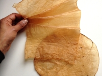 scoby  materials