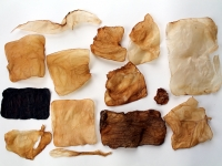 scoby snacks & materials