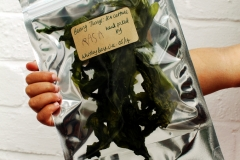 Sea Lettuce for trade & exchange