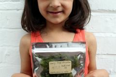 Sea Lettuce for trade & exchange